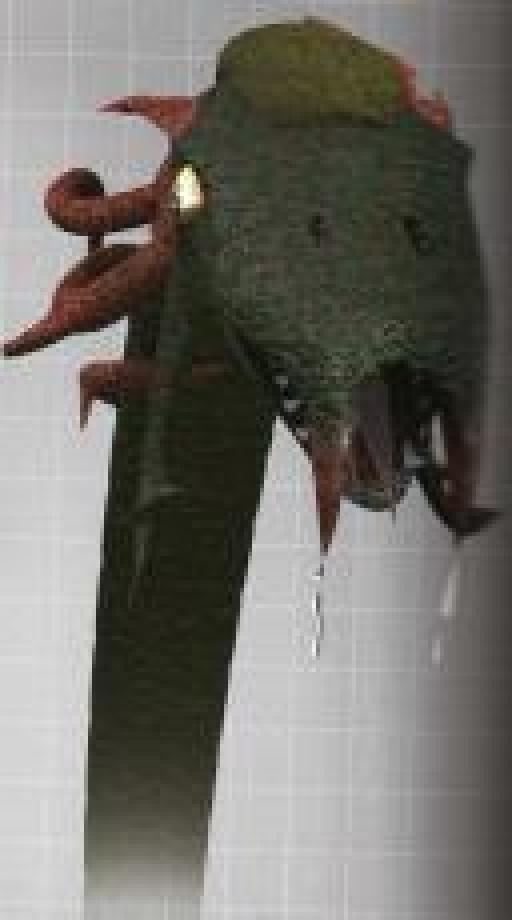 Tête de bâton amphi avec ses crocs coulants de venin