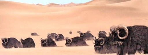 Un groupe de Banthas dans le désert de Tatooine