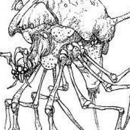 Arachnor