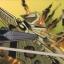 La fin du Star Destroyer Imperious Darklight.